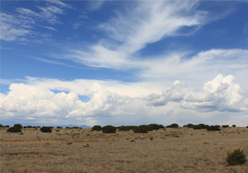 an image of what seems to be a desert with some desert grass, the image also shows the blue skies with some clear white clouds